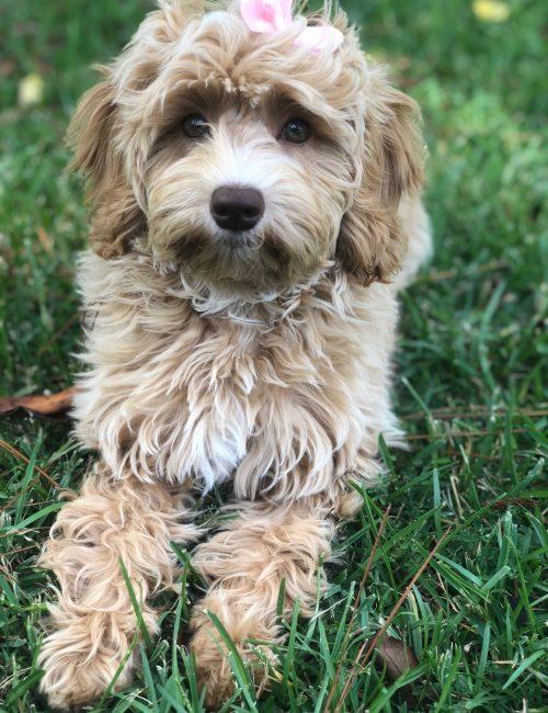 Aspen-8 months