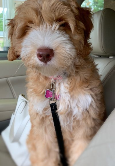 Maisey - 4 months