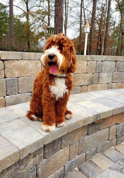 Rufus, 9 months